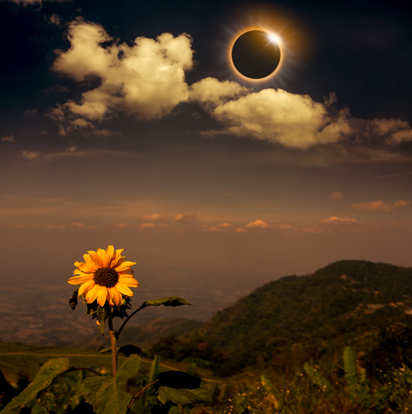 eclipse - solar-944900556.jpg