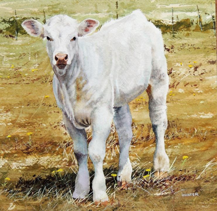 White Cow, Marin, watercolor, Ray Hunter