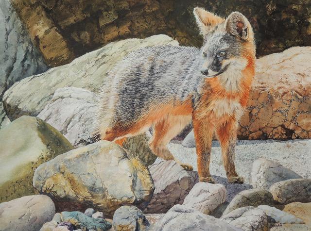 RAY HUNTER, Watchful Eye, watercolor