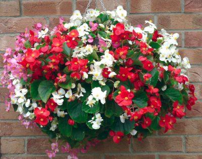 flower-basket-2018-2-400x316.jpg