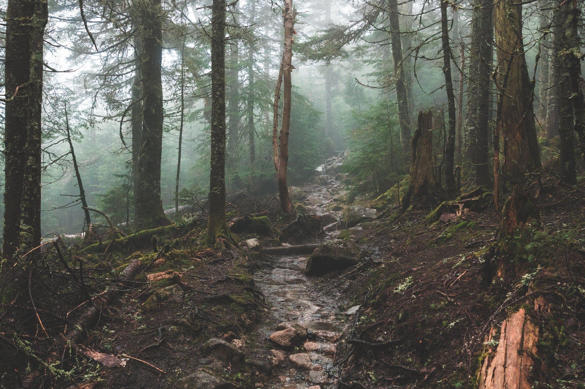 Foggy Trail to Mt. Pierce -  Photo by alex iby
