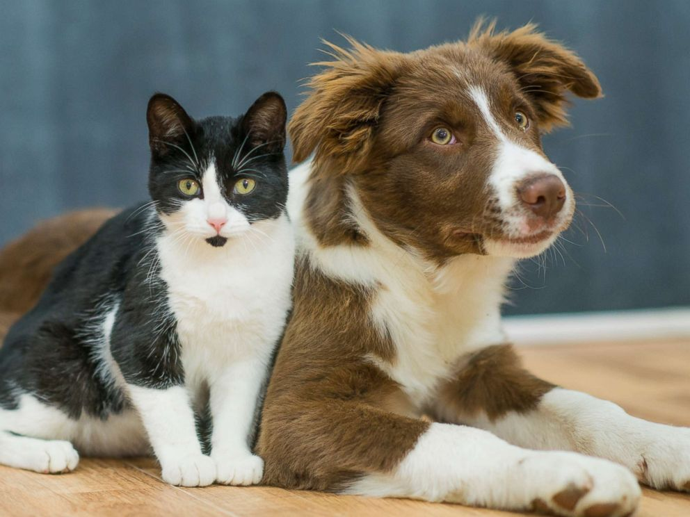 """alt=""""Cat and Dog lounging together"""""""