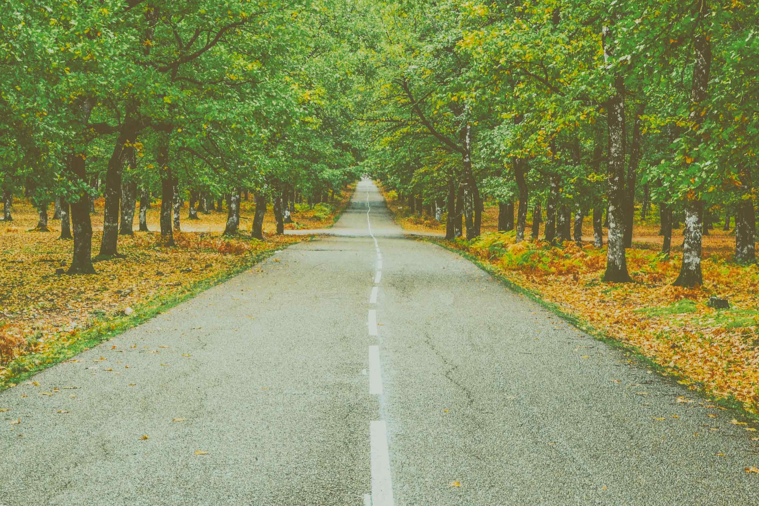 asphalt-dry-leaves-environment-694444.jpg