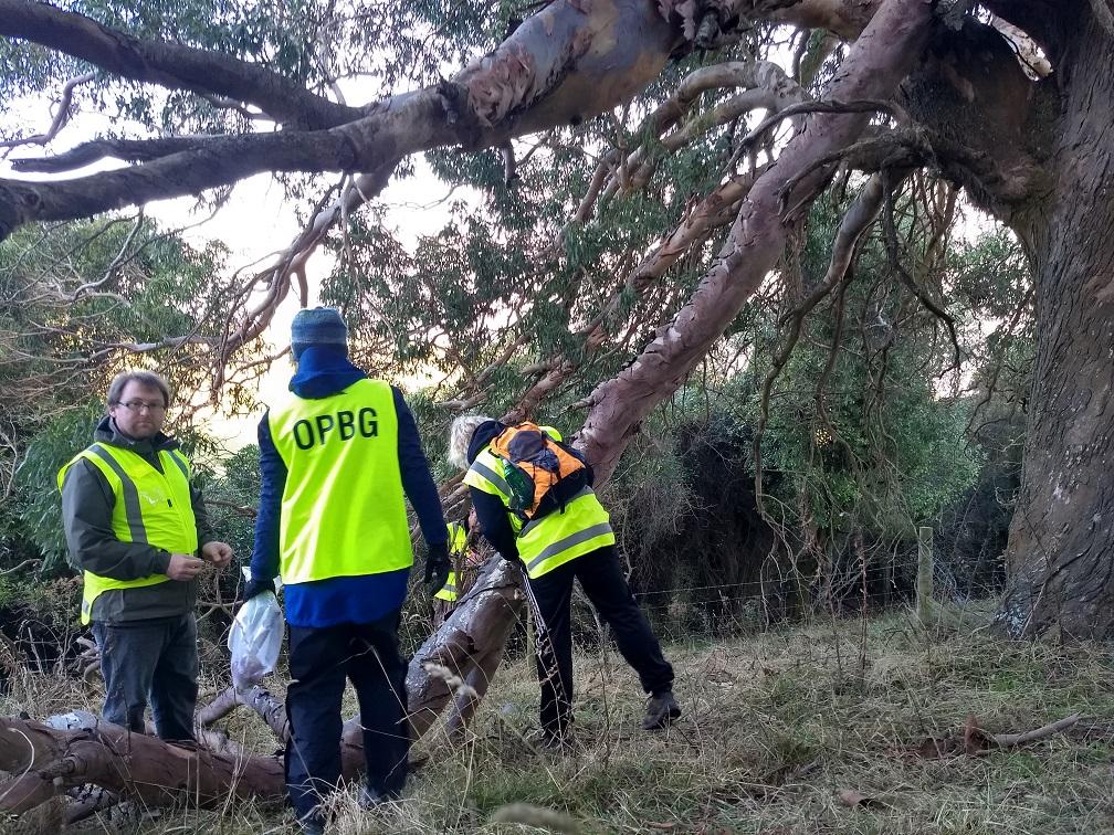 Volunteers resetting a trap at the magic gum tree possum hotspot.jpg