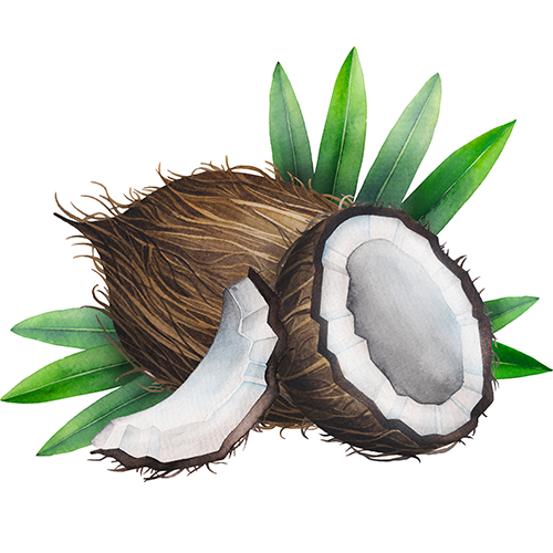 Coconut-1.png