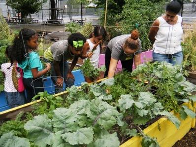 Sprout Farms Interns in the Garden, Summer 2013