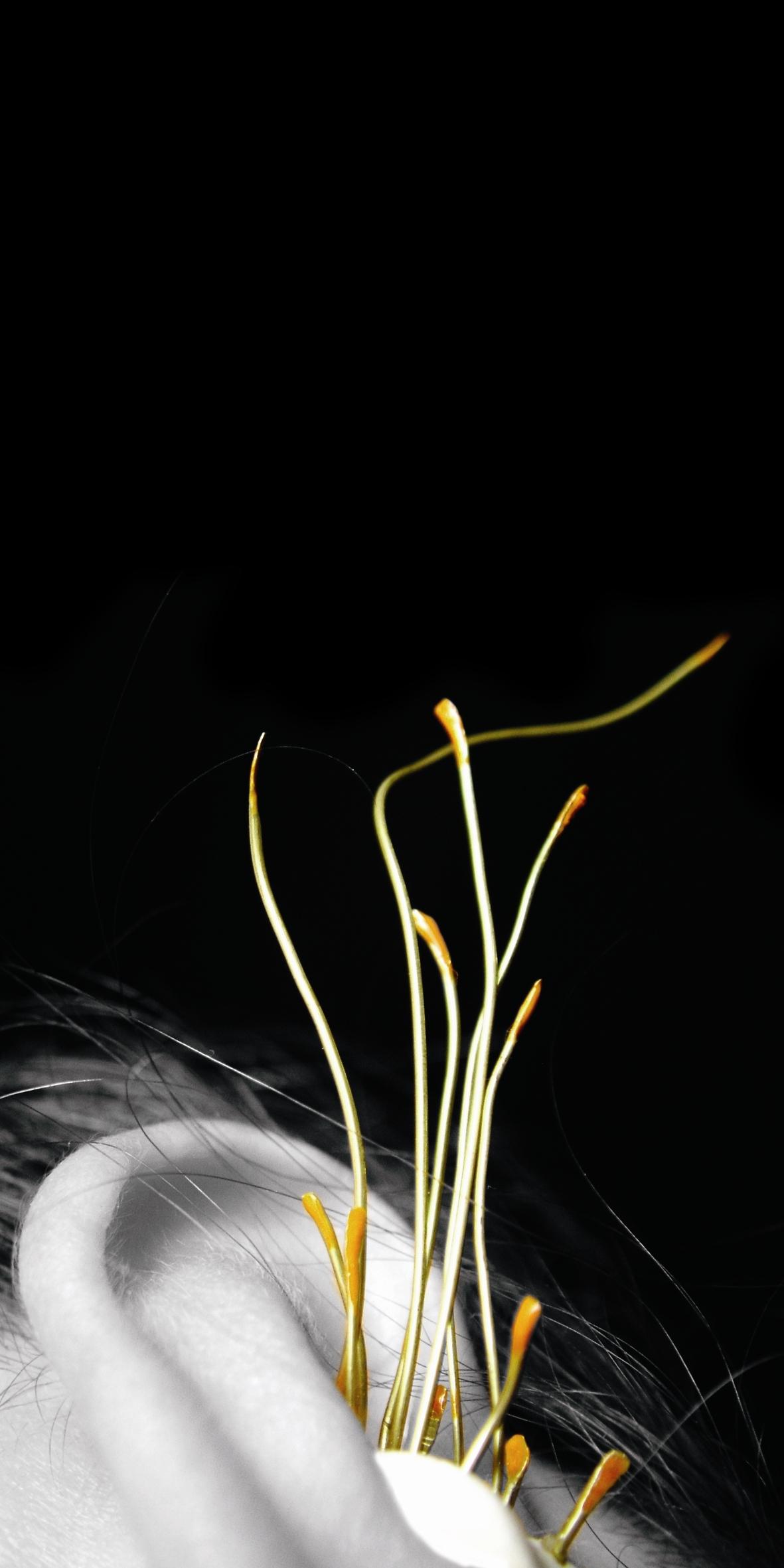 ear spores.jpg