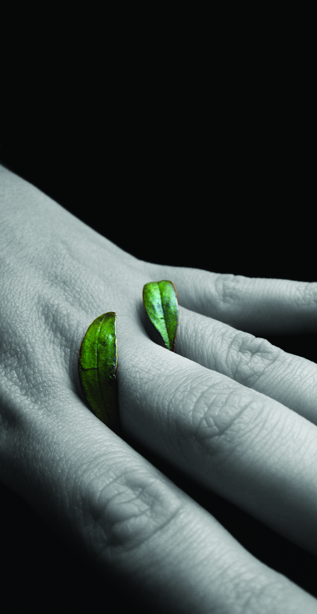 leaf ring.jpg