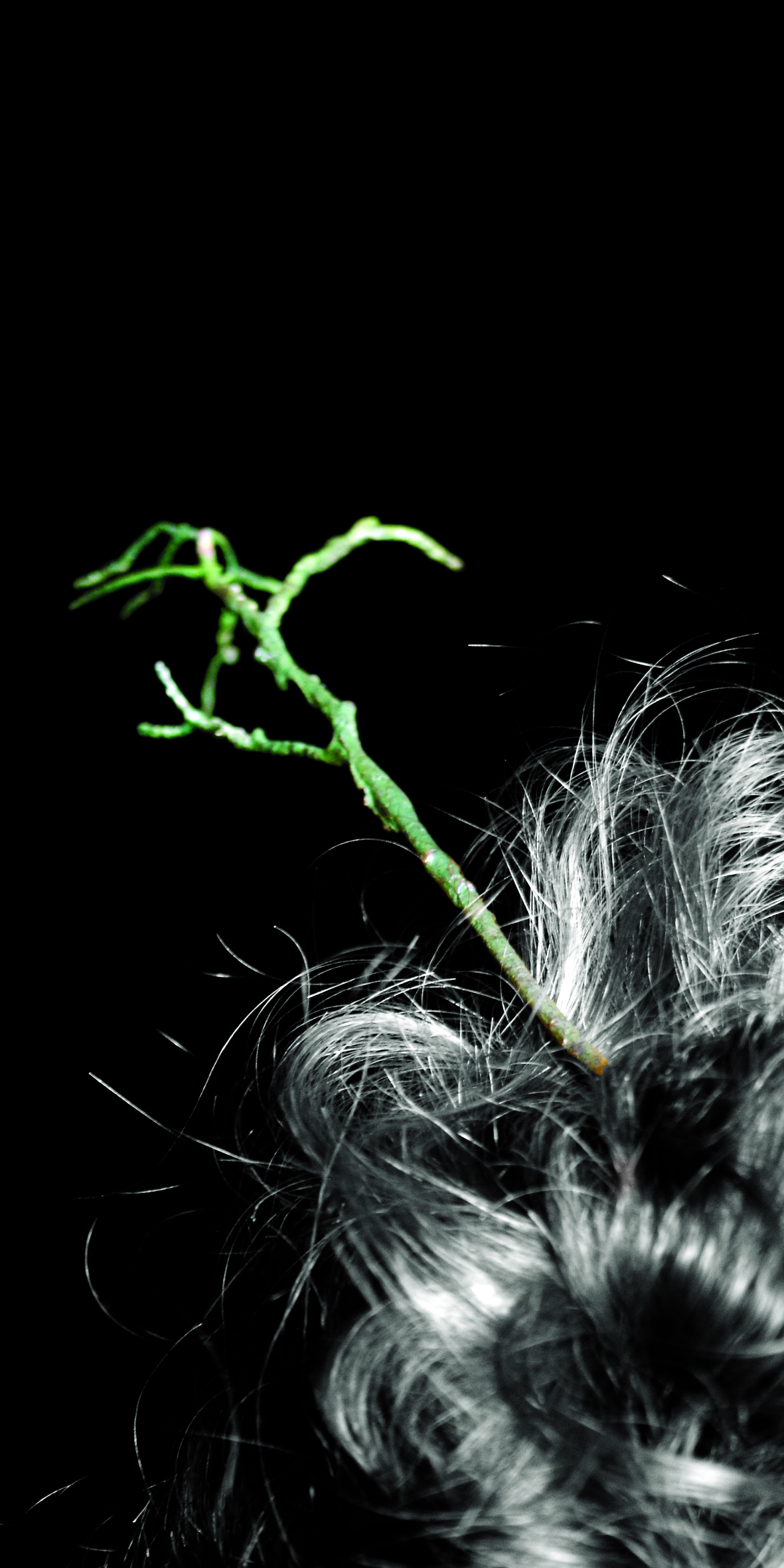 hair branch.jpg
