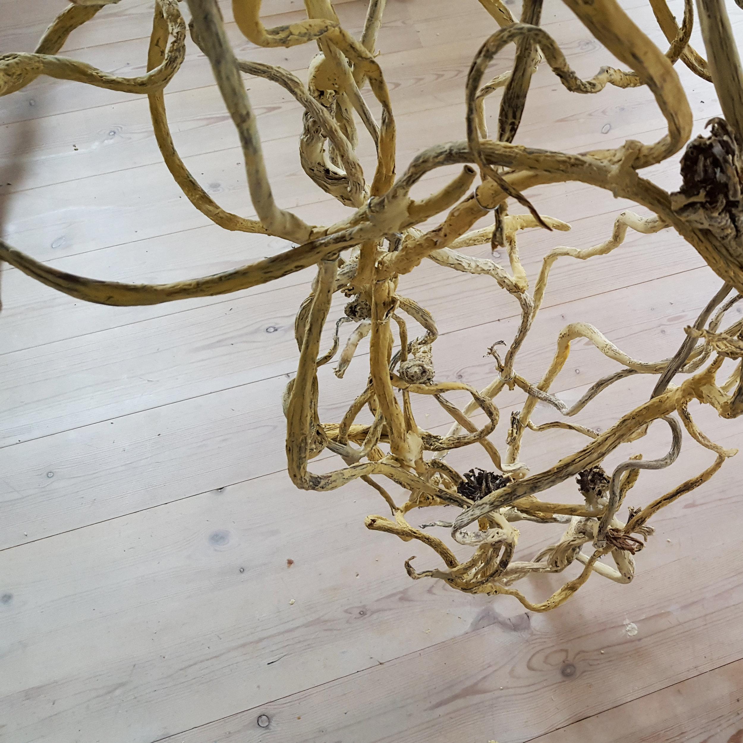 kelp1.jpg