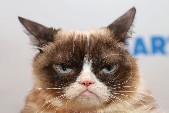 RIP Grumpy Cat, may you give them hell up there in Cat Heaven.
