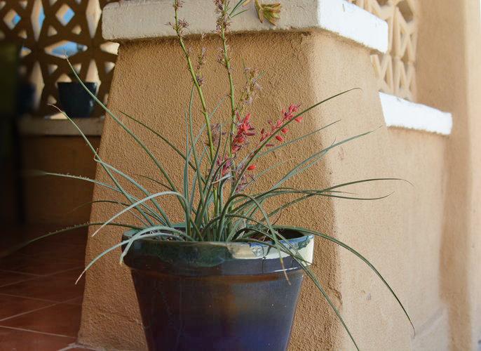 desert plant.png
