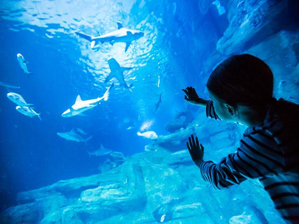 Pâques à l'aquarium de Paris.jpg