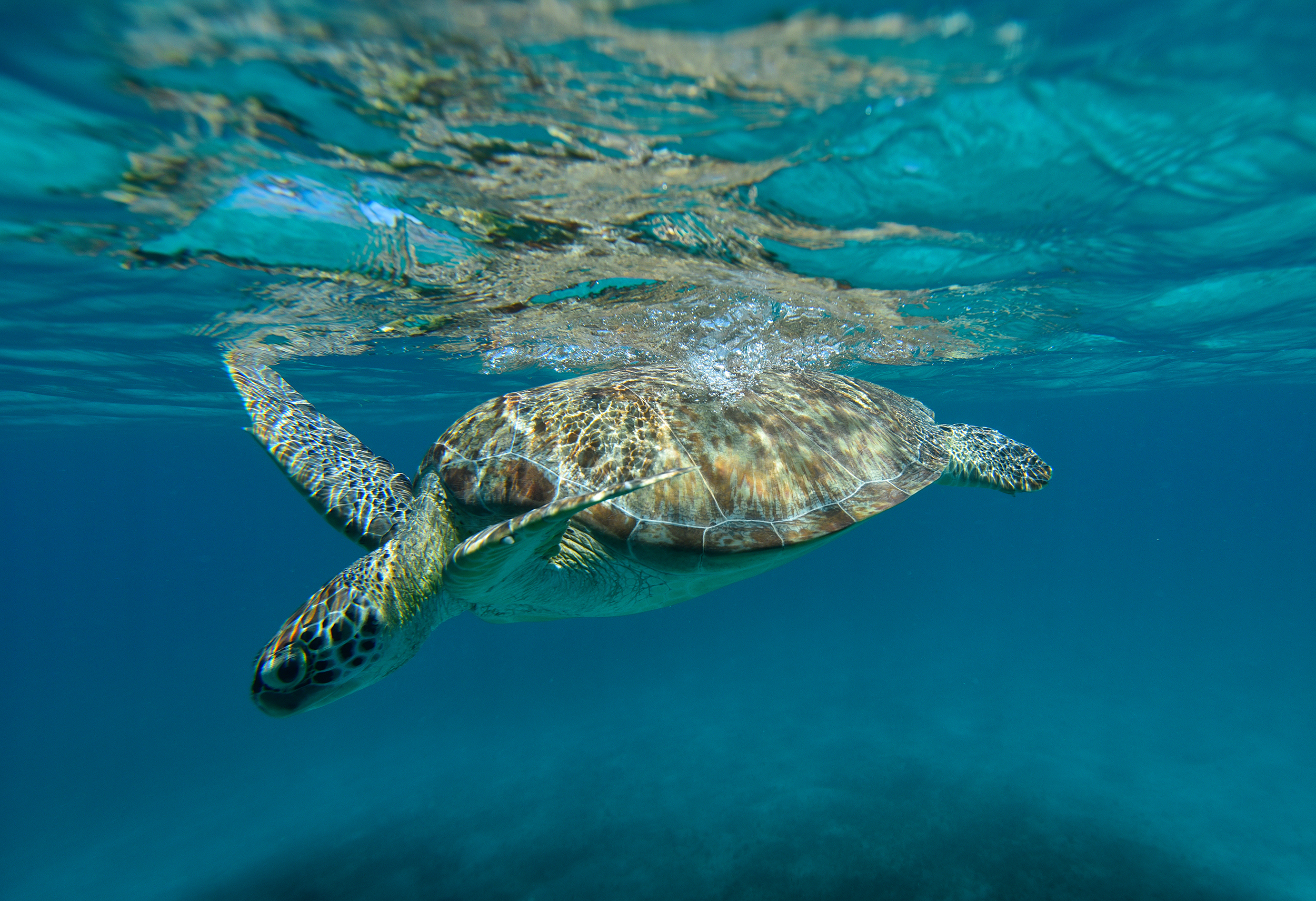 Virgin Islands Adventures - Sea Turtles - Blue Glass Photography