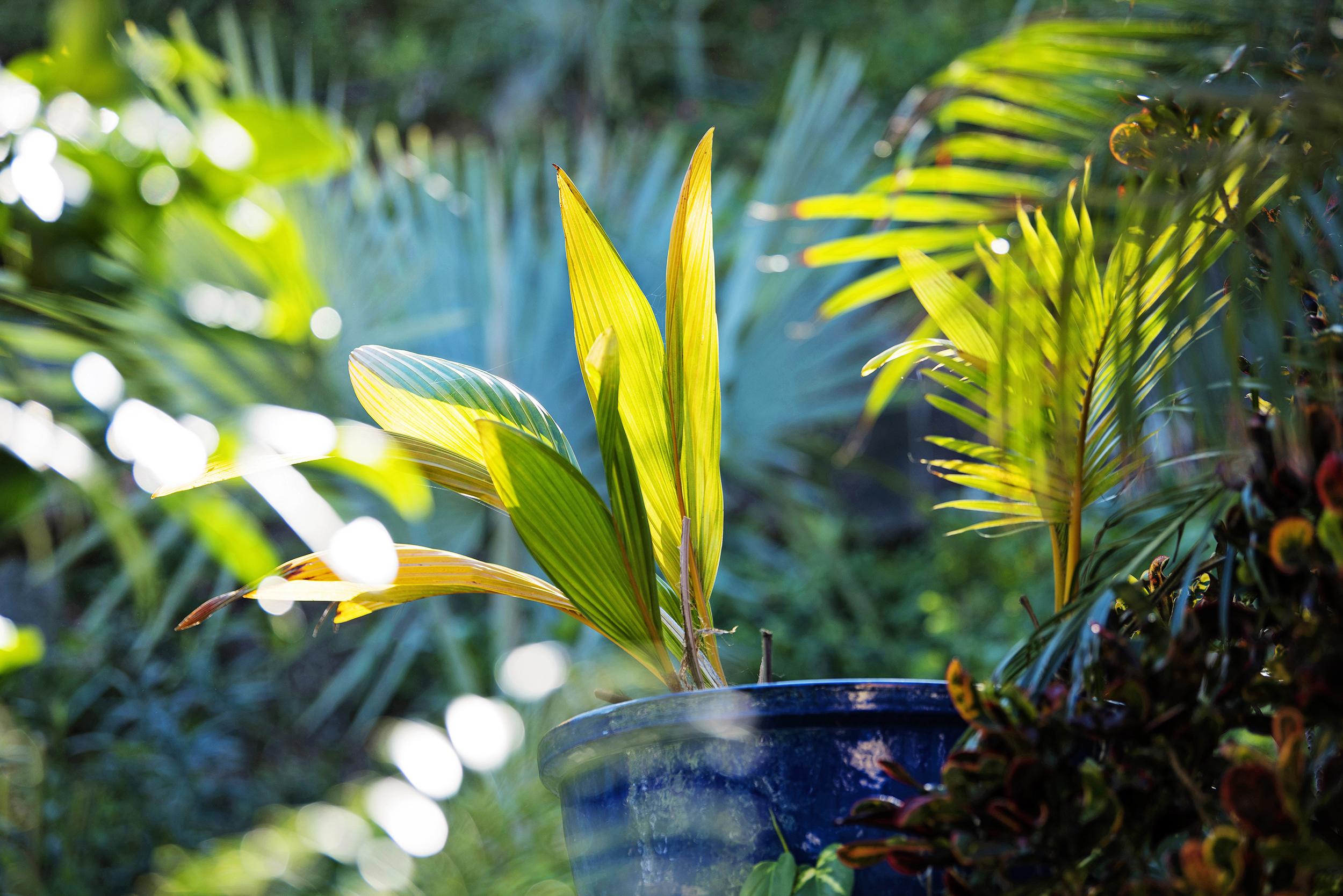 Villa Norbu- virgin Islands events - Blue Glass Photography