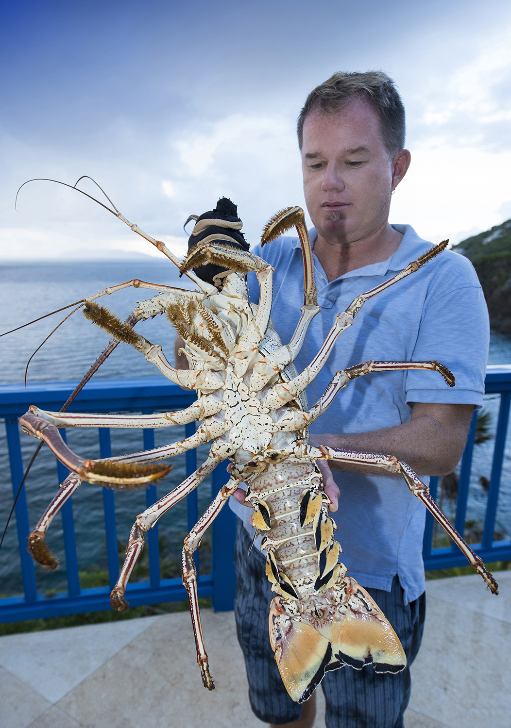 This beautiful seven pounder was caught only a few yards offshore from the cliffs of Villa Norbu. After being carefully steamed and shelled, leaving behind no trapped meat, this lobster served as dinner for five.