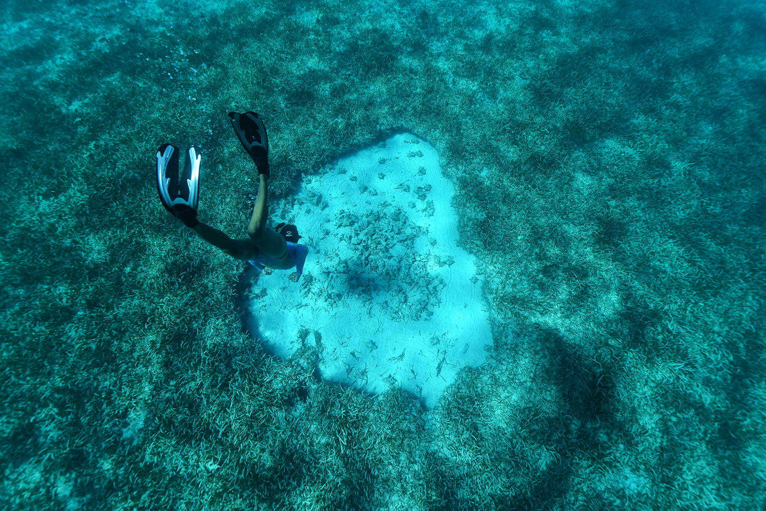 Conch Diving  - Blue Glass Photography - Virgin Islands Diving