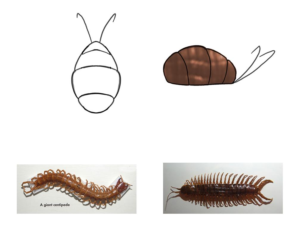 Bug design.jpg