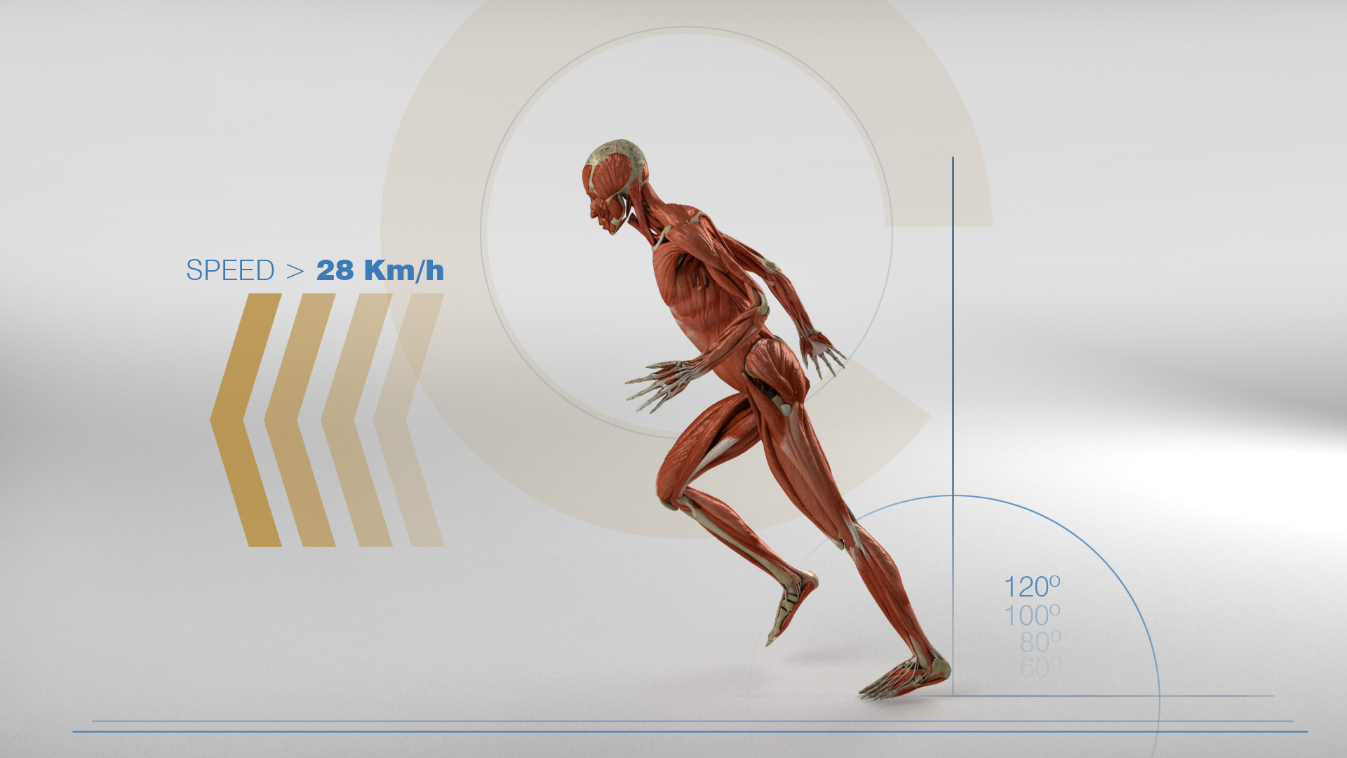 Muestra Musculos CLARO.jpg