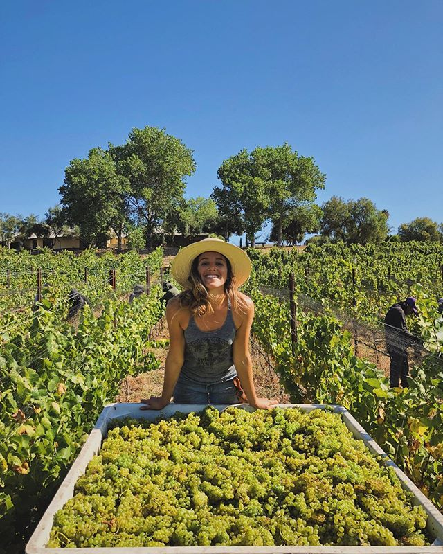 BLISS ✨ (& tired) the only way to describe this feeling on picking day after another lap around the sun farming this big little vineyard.  We kicked off our first day of harvest at Chene with a Chardonnay pick & she's foot stomped, pressed & in barrel, spiked with my vineyard pied de cuve and sitting pretty ☀️ swooooon 🥰 #beyourownfarmer #biodynamics