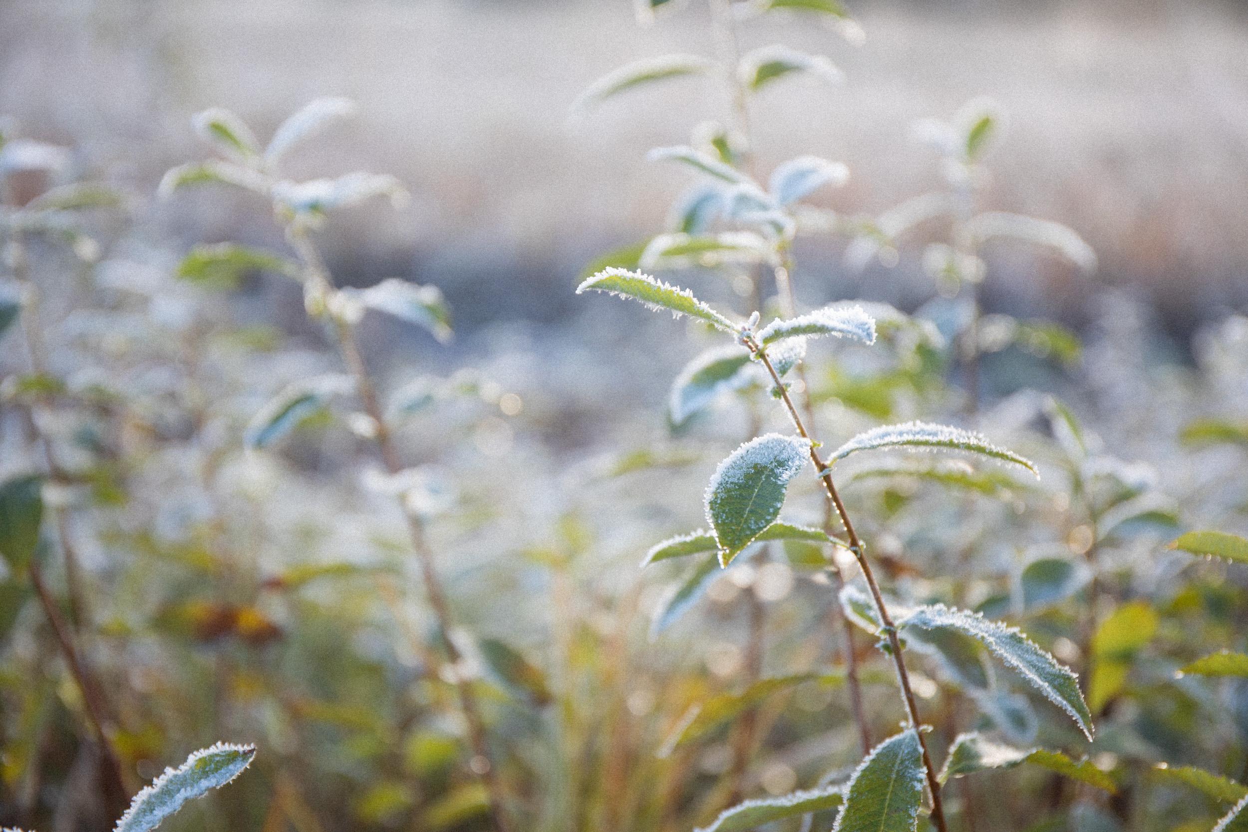 Meistä - Suomen luonto on meille rakas. Metsä rauhoittaa, kuuntelee, se innostaa ja metsässä tunnemme elävämme. Luonnossa liikkuminen saa aistit valloilleen.