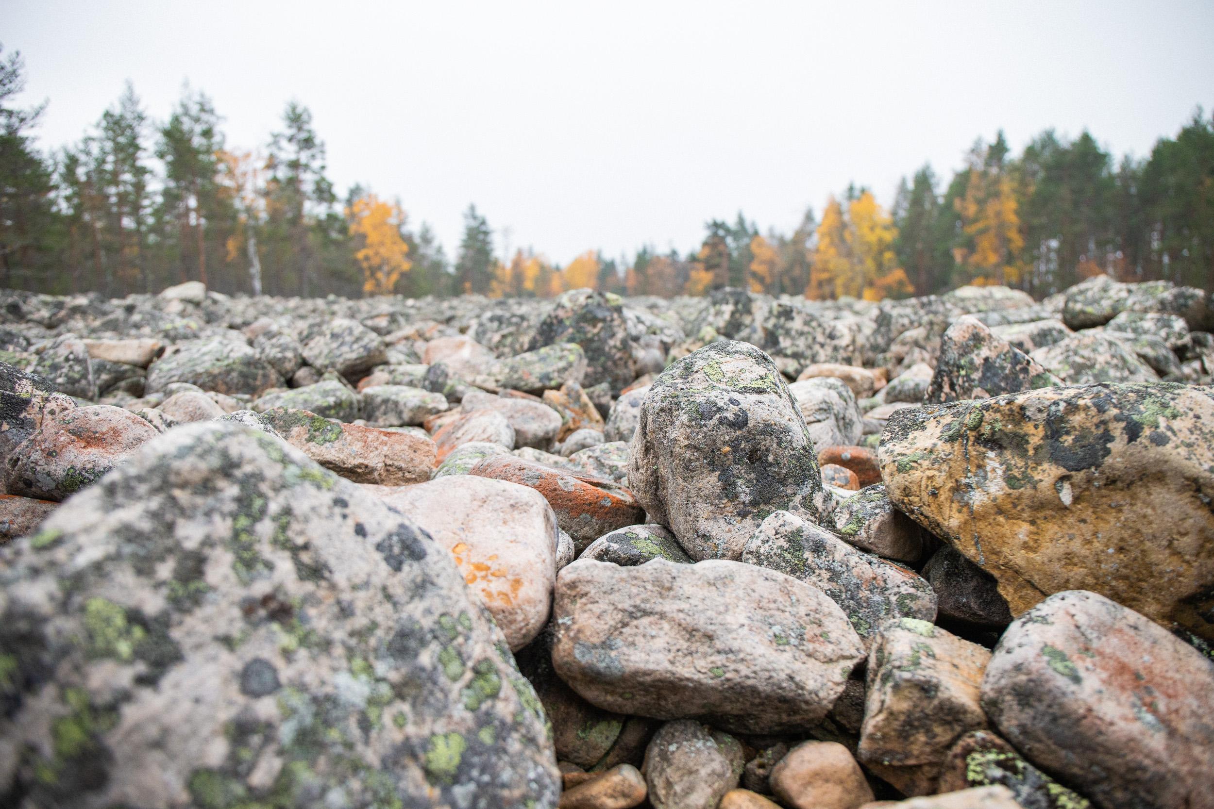 villikettu-kivijata.jpg