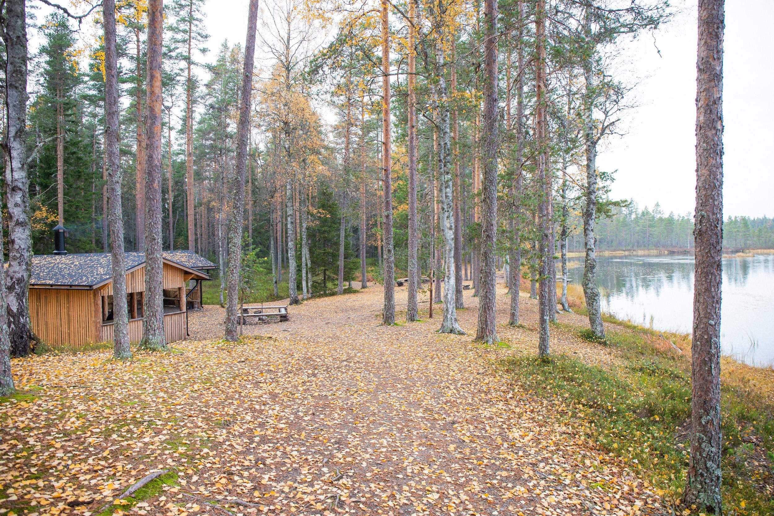 villikettu-spitaalijärvi.jpg