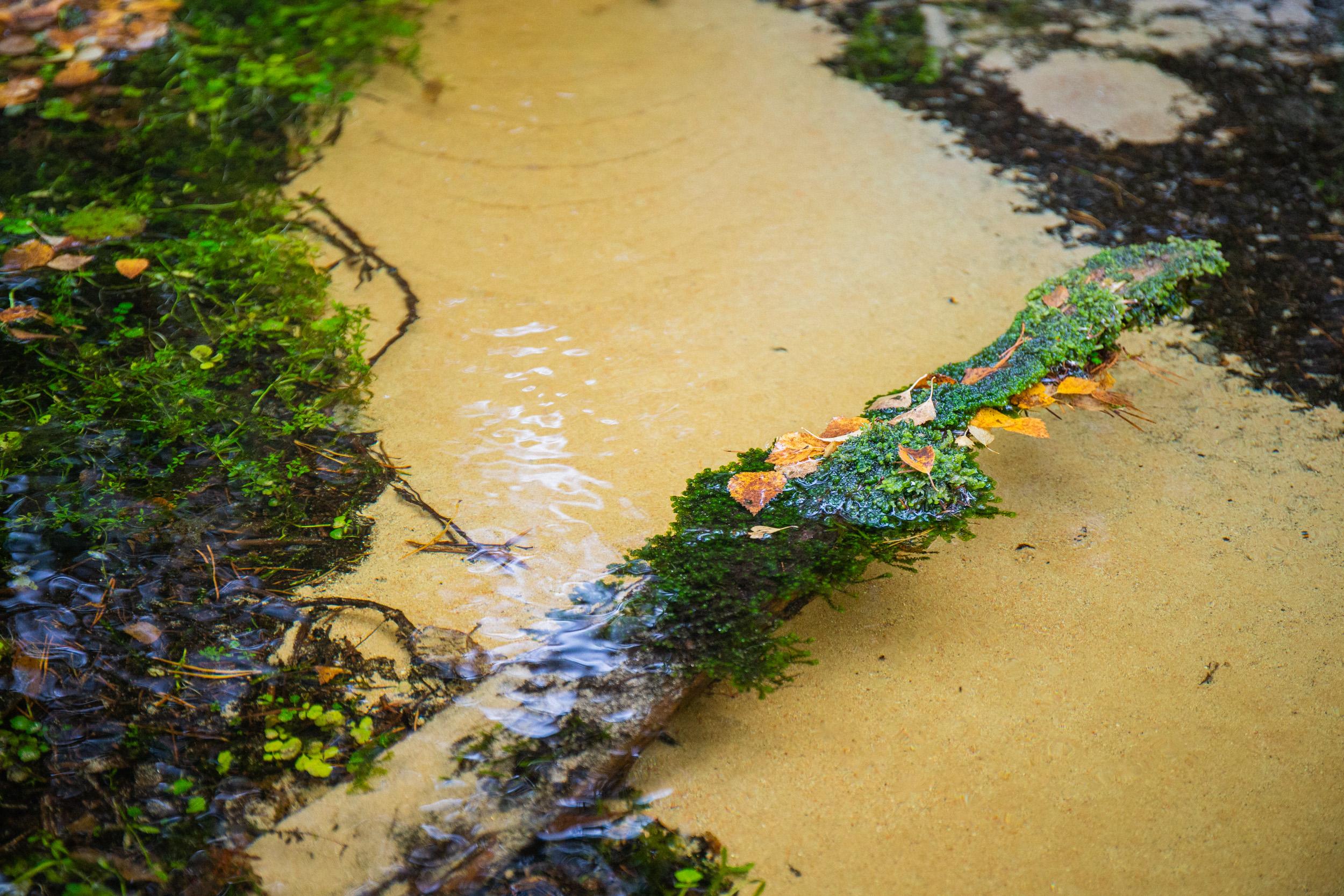 villikettu-lähdevesi.jpg