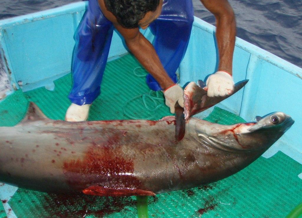 shark-finning.jpg