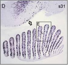 Ferreiro-Galve Fig. 2D
