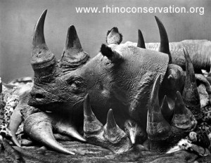 rhino-horn-trafficking