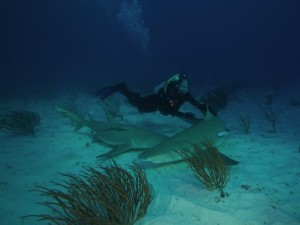 Erich Ritter of the Shark Research Institute and Shark School is one of the only professional applied shark-human interaction specialists.