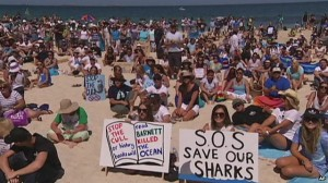 Western Australians protesting the shark cull