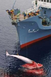 japan whaling 1