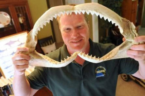 Clay Creswell holds the jaws to a dusky shark at his home in Rocky Point on Tuesday, Sept. 16, 2014. Creswell tracks shark bites in both Carolinas for the Shark Research Institute's nationwide database and has been facinated by them since he was a child. Photo by Ken Blevins