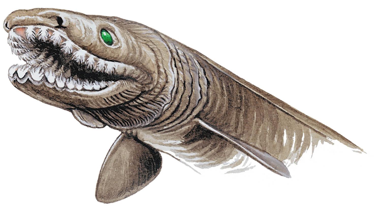 frilled-shark-chlamydoselachus-anguineus-head.jpg
