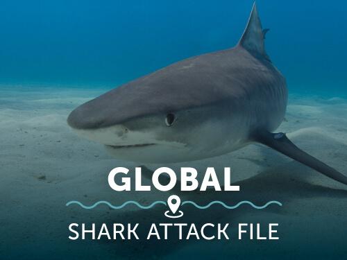 support-global-shark-attack-file.jpg