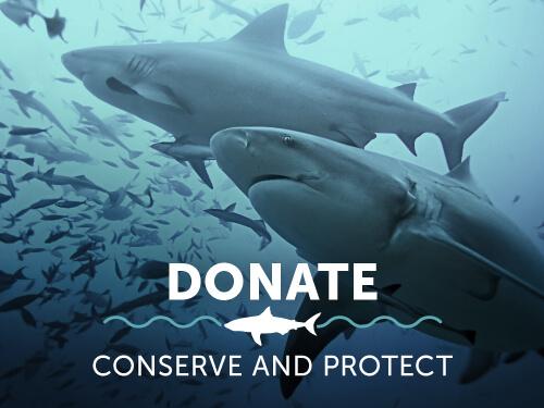 donate-shark-research-institute.jpg