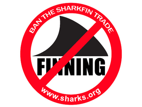 sri-ban-shark-finning.jpg