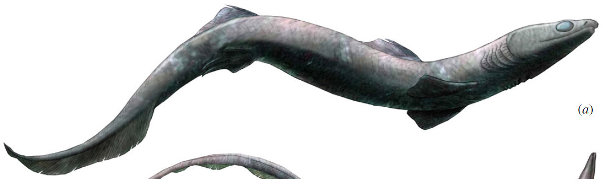 Reconstruction of the likely appearance of the extinct shark  Phoebodus saidselachus . (Image from Frey et al.)