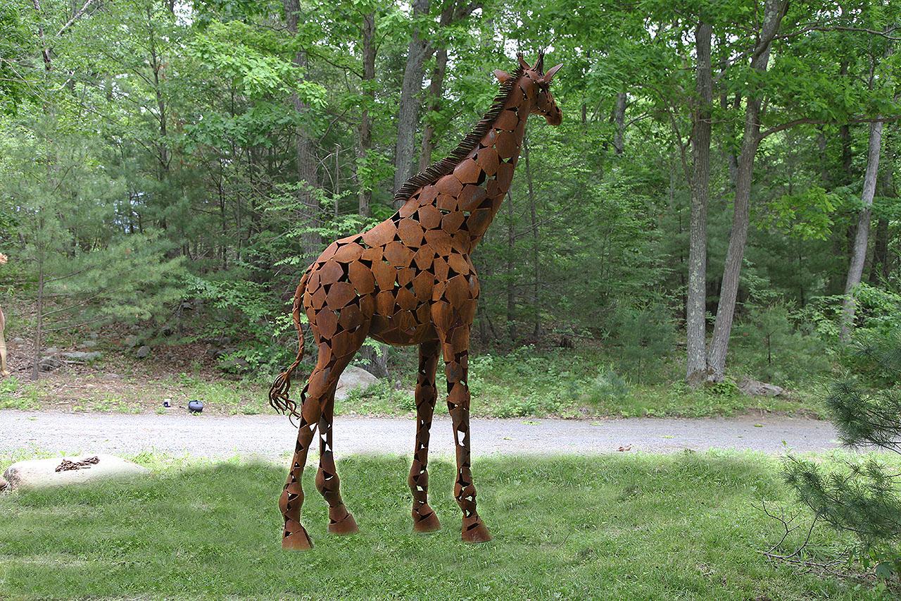 Baby Giraffe Xena at six Flags.jpg