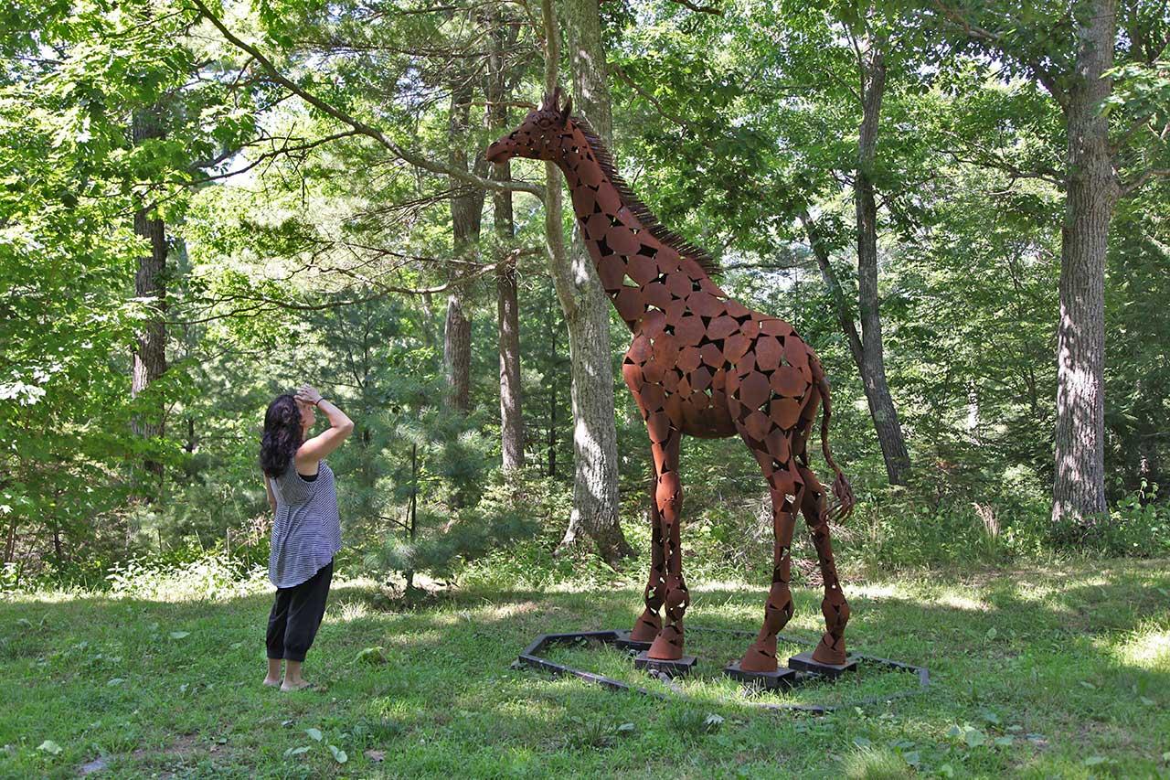 Giraffe Xena at Six Flags.jpg