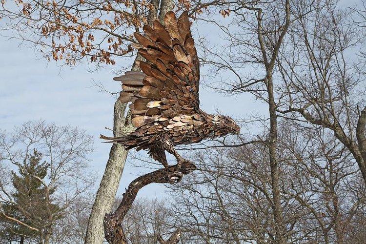 Eagle+2_27.jpg