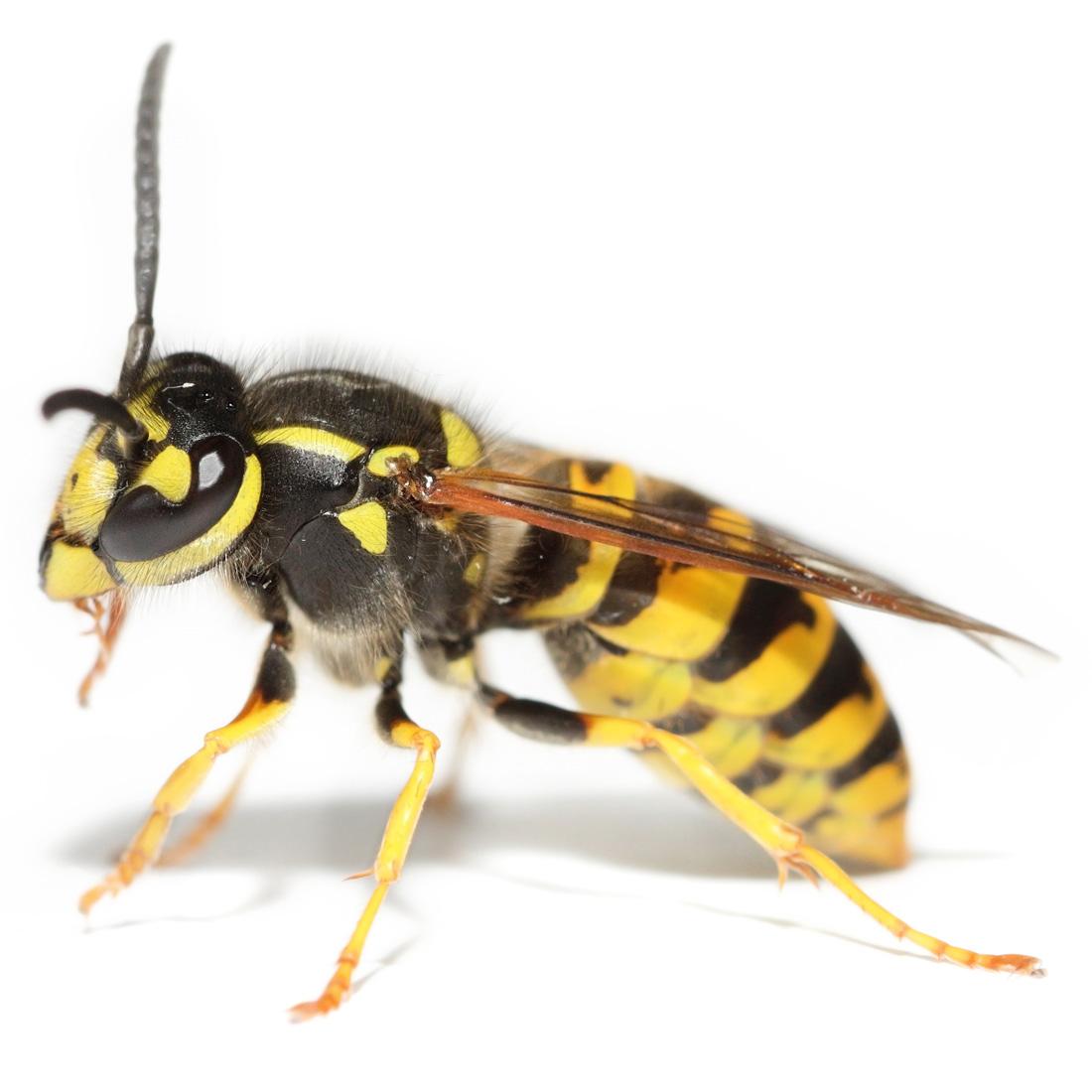 wasps-nest-1100.jpg