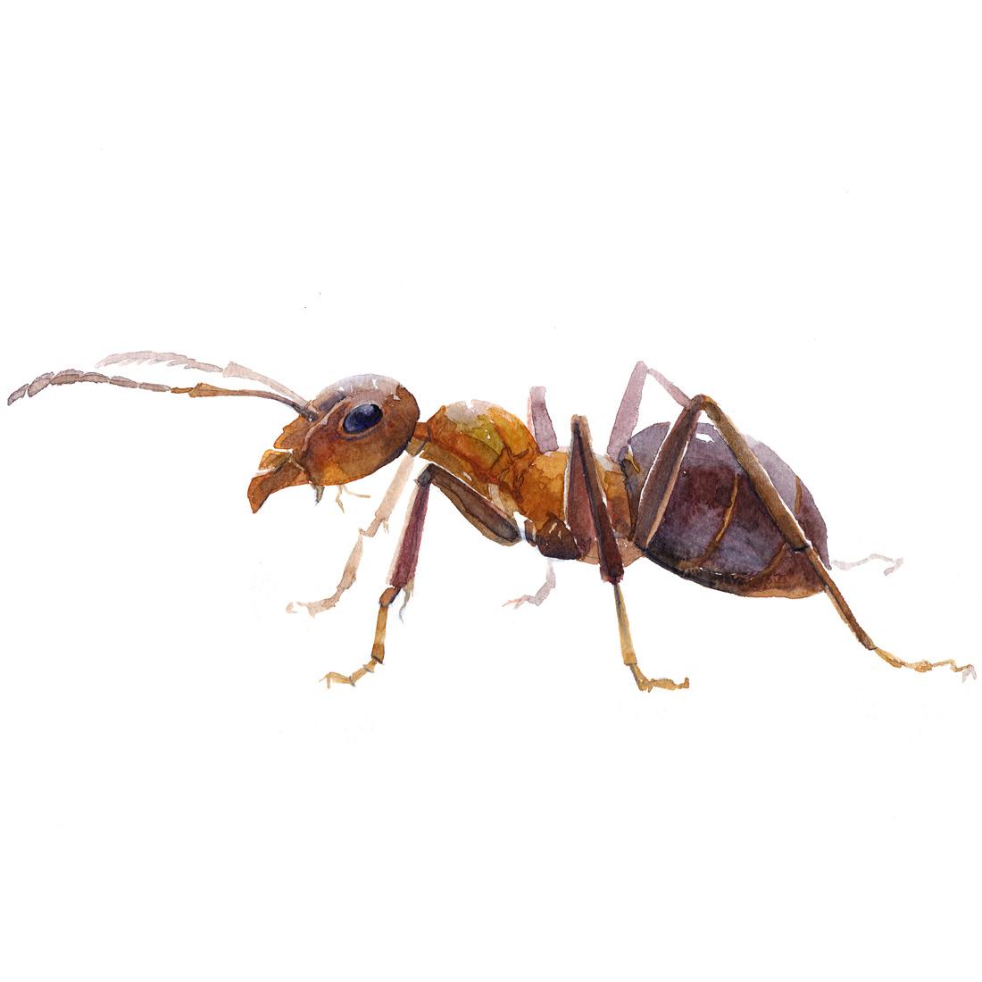 ants-nest-1100.jpg
