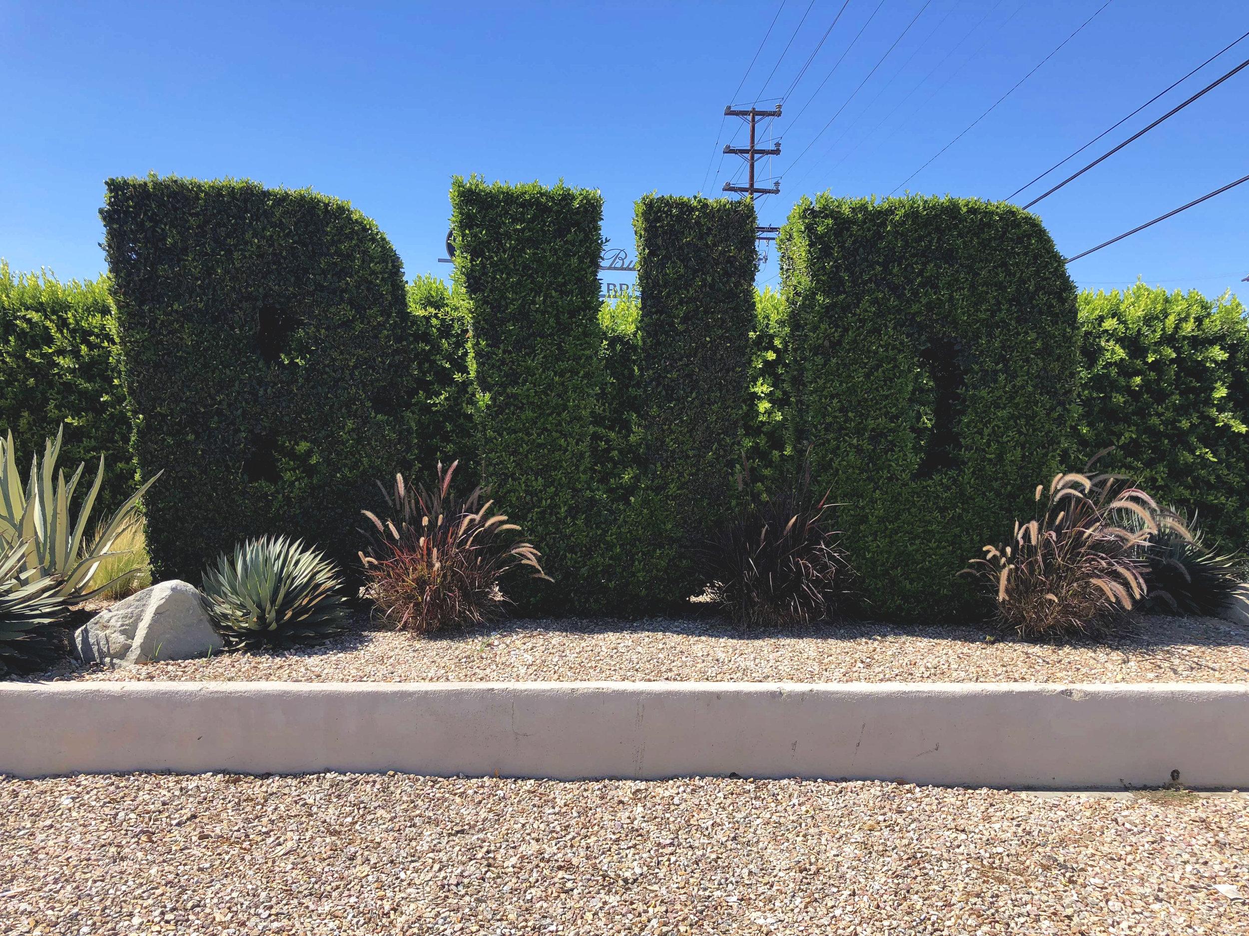 budwesier-backyard-bbq-bush.jpg