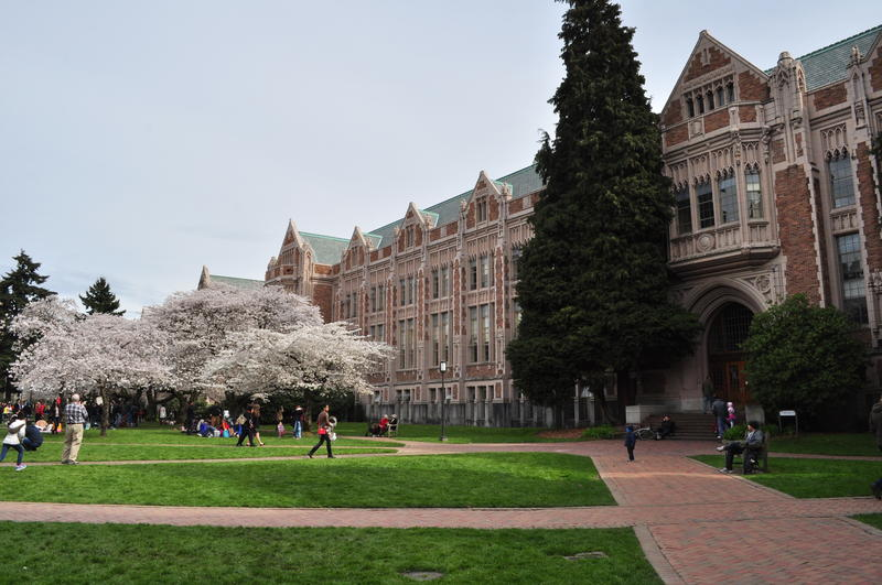 Copy of KNKX: Diversity On UW Campus Proves Lacking For One Student