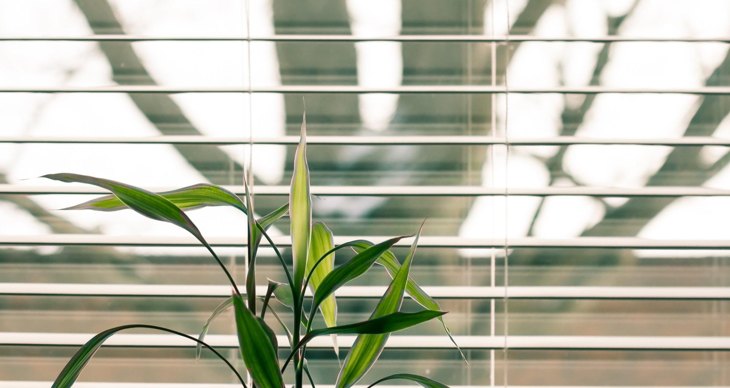 WINDOW COVERING - Altex | Hunter Douglas | Maxxmar | Persienne DesignSBM | Sol-R