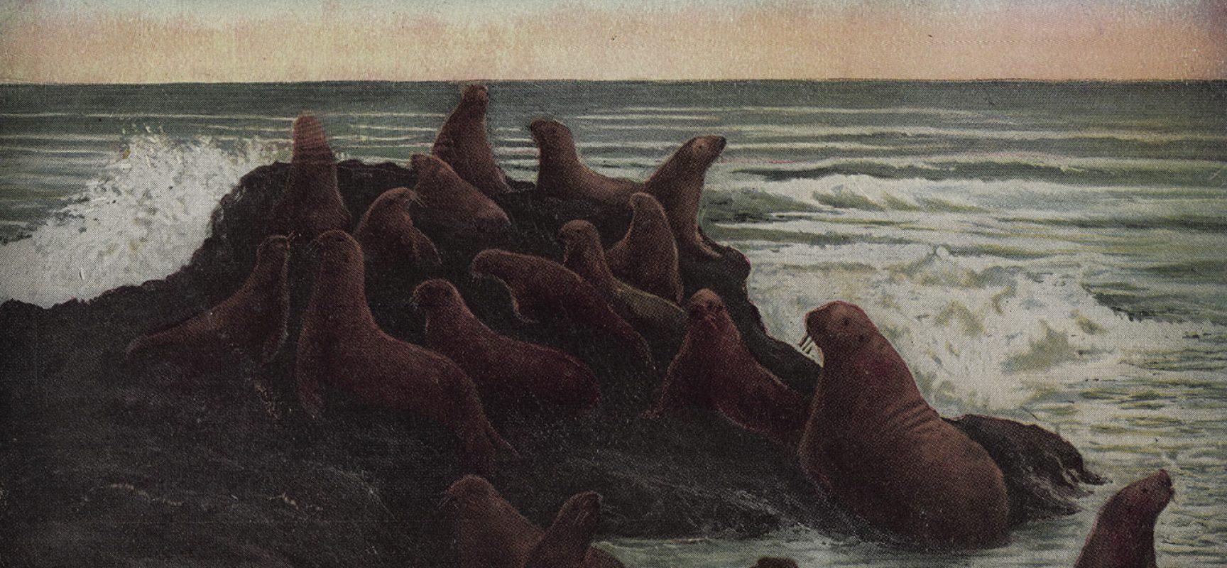A vintage (1897) postcard showcases San Francisco's Seal Rocks, with its resident seals. Image Public Domain via    Malina Jones   .