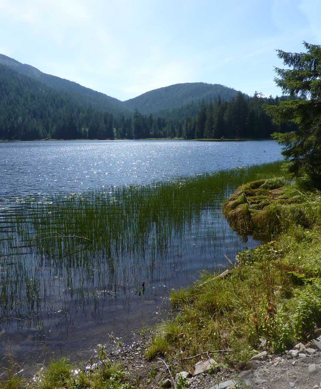 A lake and mountains with grasses on the shore.